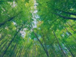 Confira 4 hábitos simples para preservar o meio ambiente e economizar recursos naturais
